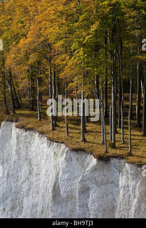 Trees in autumn colors at the edge of chalk cliff, chalk Jasmund National Park, island of Ruegen, Germany - Stock Photo