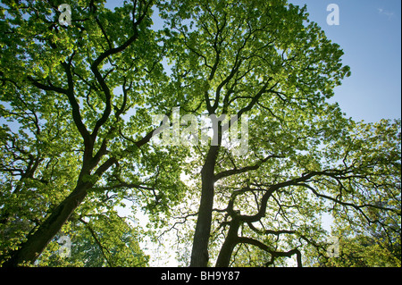 Trees in springtime, Parc de Bagatelle, Paris, France - Stock Photo