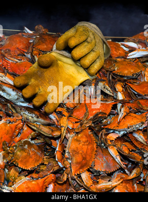 Steamed blue crabs on display at the wharf a waterfront seafood stand on Maine Avenue in Washington DC. - Stock Photo