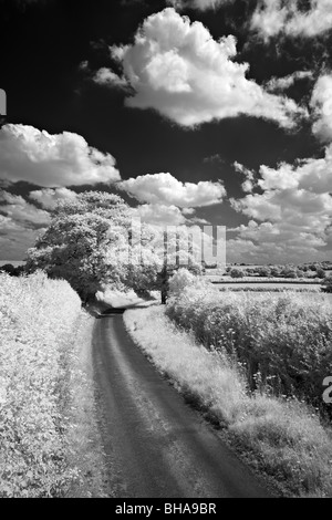 a country lane, nr Up Cerne, Dorset, England, UK - Stock Photo