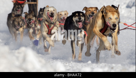 Dog team runs in the Anchorage Fur Rondezvous Sled Dog Races, 2007 - Stock Photo