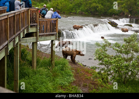 Visitors view brown bears feeding on sockeye salmon,  Katmai National Park, Southwest, Alaska - Stock Photo