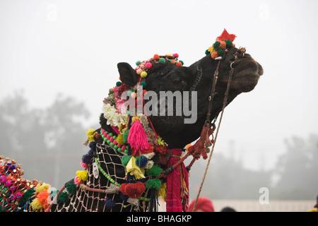 Maghi Mela India Punjab Tradition Festival camel - Stock Photo