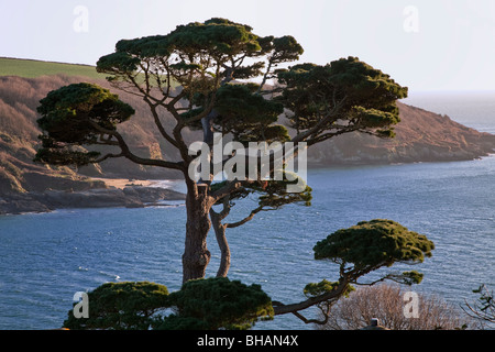 SALCOMBE HARBOUR KINGSBRIDGE ESTUARY IN WINTER SALCOMBE SOUTH DEVON UK - Stock Photo