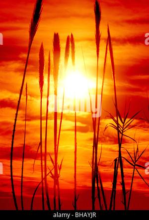 Grass grows along the Rillito River in the Sonoran Desert, Tucson, Arizona, USA. - Stock Photo