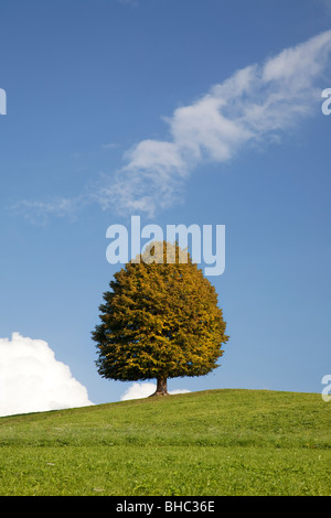 Lone Tree on hill - Stock Photo