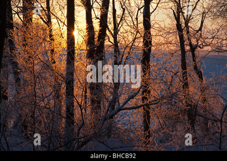 New Palestine, Indiana - A rising sun lights up frost crystals on tree branches on an Indiana farm. - Stock Photo