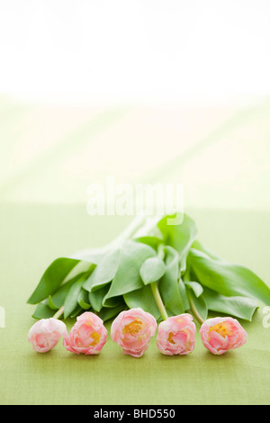 Row of pink tulips - Stock Photo