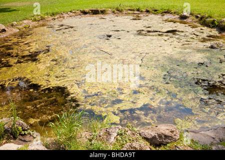 Algae growing on water - Stock Photo