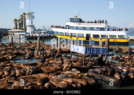Tourist boat and Sea Lions at the famous Pier 39 - Stock Photo
