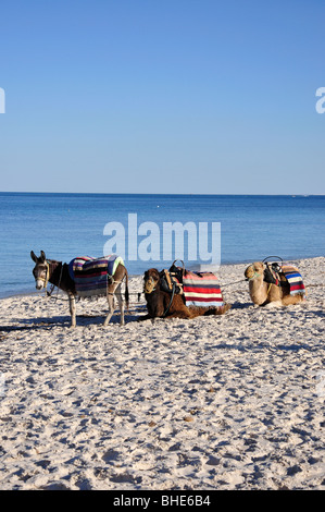 Donkeys and camels on beach, Port El Kantaoui, Sousse Governorate, Tunisia - Stock Photo