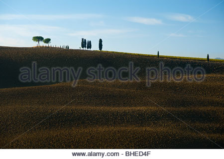 Cypress trees in a field near San Quirico D'Orcia, Val D'Orcia, Tuscany, Italy. - Stock Photo