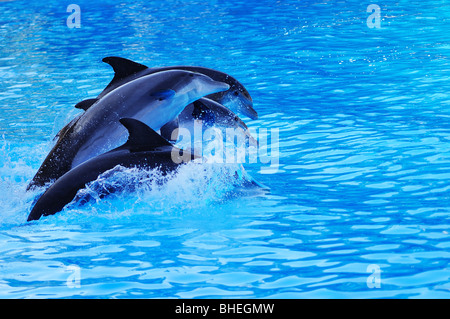 Dolphin show in Loro Parque, Tenerife, Canary Islands, Spain - Stock Photo