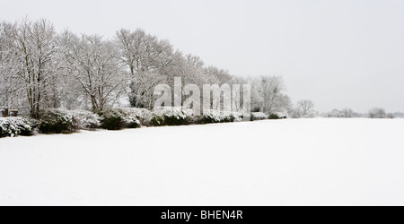 Field and trees in winter. Send, Surrey, UK. - Stock Photo