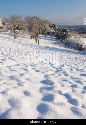 Winter at Newlands Corner near Guildford, Surrey, UK. - Stock Photo