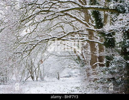 Woodland in winter. Send, Surrey, UK. - Stock Photo