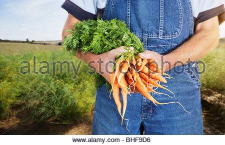 Farmer holding carrots - Stock Photo