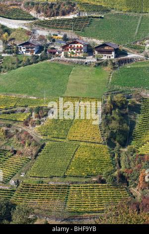 Vineyards near Bolzano, Trentino-Alto Adige/Suedtirol, Italy - Stock Photo