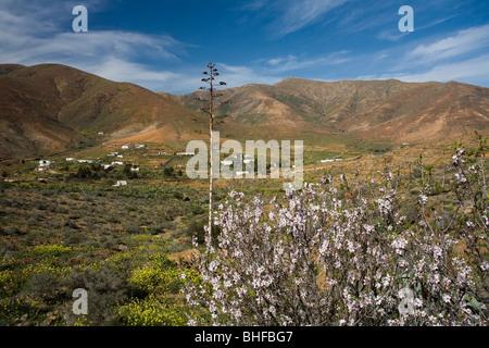 Almond blossom in a valley under clouded sky, La Vega de Rio de las Palmas, Parque Natural de Betancuria, Fuerteventura, - Stock Photo