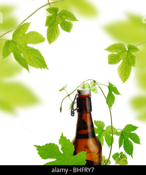 Beer bottle with decoration of hop plant - Stock Photo