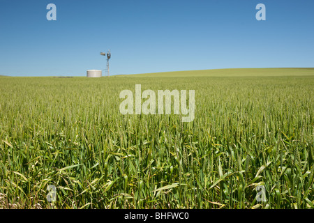 windmill in fields of wheat in the countryside at burra south australia - Stock Photo
