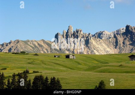Alpine meadow with cabins in summer, Alpe di Siusi, Valle Isarco, South Tyrol, Italy, Europe - Stock Photo