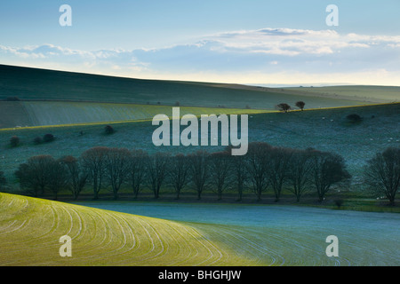 Frost on the hillside, South Downs near Woodingdean East Sussex - Stock Photo