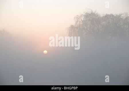 Misty winter sunrise over Leg of Mutton Pond. Bushy Park, London. - Stock Photo