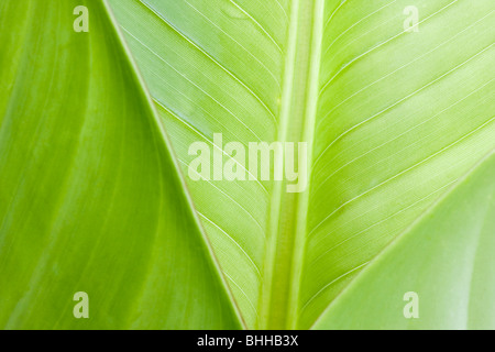 Close-up of tropical leaves in Brazil - Stock Photo