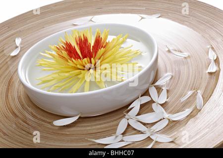 Holzschale und Porzellanschale mit Chrysantheme - Stock Photo