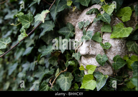 The sculpture of a face covered with ivy, Sweden. - Stock Photo