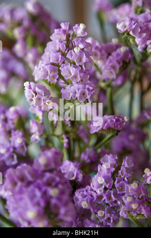 Close up of an purple flower - Stock Photo