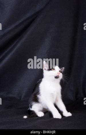 Black and white cat sitting - Stock Photo