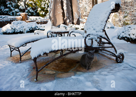 A domestic cat sitting under a snow covered outdoor lounge chair looking unhappy after Atlanta Georgia, Southeastern - Stock Photo