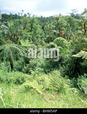 Rainforest landscape, Upolu Island, Samoa