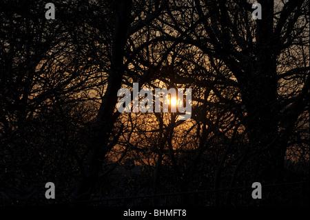 Orange winter sun shines through the trees - Stock Photo