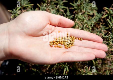 Slow release fertilizer - Stock Photo