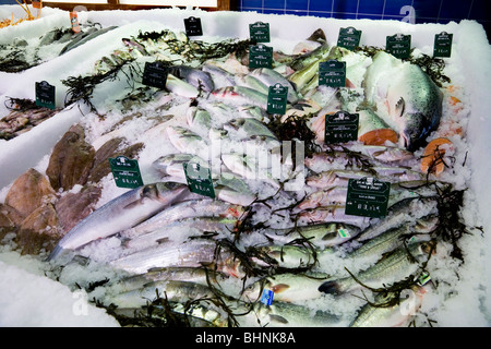 Display of fresh fish –on ice – for sale in a French supermarket. - Stock Photo
