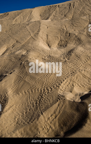 Bird footprints in sand dune, Sahara Desert, Mali, West Africa - Stock Photo