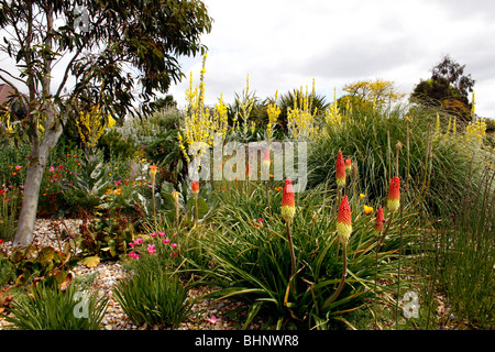 THE COLOURFUL DRY GARDEN IN SUMMER AT RHS HYDE HALL IN ESSEX. UK. - Stock Photo