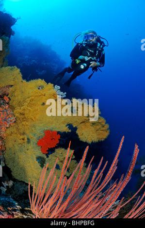 scuba diver at colorful coral reef, Eel Garden outside, Menjangan Nationalpark, Bali - Stock Photo