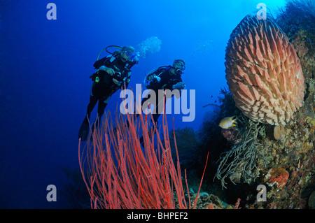 red whip corals and barrel sponge and scuba diver, Bali Barat Nationalpark, Island Menjangan, Bali - Stock Photo