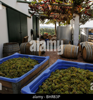 Post House cellar and winery Stellenbosch cape province South Africa at harvest time Chenin grapes arrive for pressing - Stock Photo