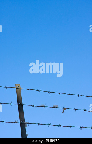 Barbed wire fence against blue sky - Stock Photo