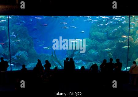 The National Marine Aquarium in Plymouth - Stock Photo