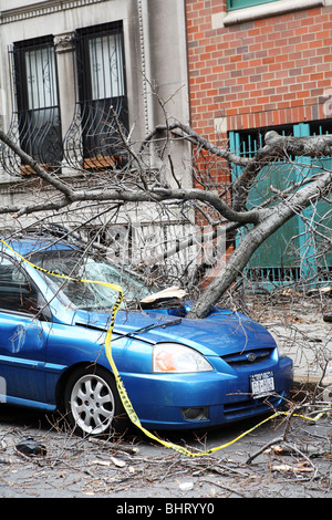 Parked Car crushed by wind damaged tree - Stock Photo