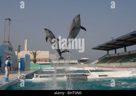 BOTTLENOSE DOLPHINS JUMPING AT SHOW - Stock Photo