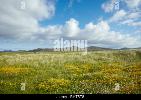 Wildflowers in the machair behind the dunes on the coast of North Uist, Outer Hebrides of Scotland - Stock Photo