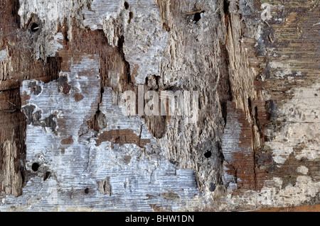 Wood Background - John Gollop - Stock Photo