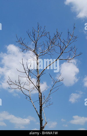 Leafless Tree in cloudy sky background.Scenic forest tree View from Kerala,India - Stock Photo